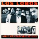 Los Lobos Album - By The Light Of The Moon