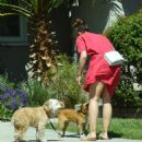 Minka Kelly in Red Dress with her dogs in Los Angeles - 454 x 523