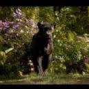 The Jungle Book (2016) - 454 x 303