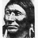 Antonga Black Hawk