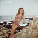 Judy Carne - 371 x 480
