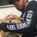 BIG PUSSYCAT Lewis Hamilton sinks his teeth into time off by wrestling a TIGER
