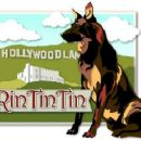 Rin Tin Tin - 454 x 363