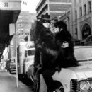Donyale Luna and George Willing wearing their identical monkey fur coats and sunglasses, 1967 - 400 x 487