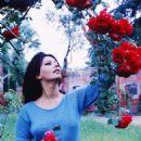 Sophia Loren - 454 x 615