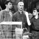 The Many Loves of Dobie Gillis - 300 x 232