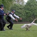 A scene from Rogue Pictures' Hot Fuzz - 2007