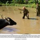 "Jeff Portnoy (Jack Black, left) and Kevin Sandusky (Jay Baruchel, right) try to corner and capture a water buffalo in the action comedy ""Tropic Thunder."" Credit: Merie Weismiller Wallace. © 2008 DreamWorks LLC. All Rights Reserved."