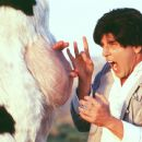 The Chosen One (Steve Oedekerk) gets caught up in the 'udder' madness of battling a karate cow in 20th Century Fox's Kung Pow!: Enter The Fist - 2002