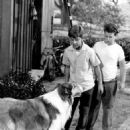 Lassie - 454 x 597