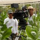 Producer/Director/Actor Andy Garcia lines up a shot in the Fellove tobacco field in his film the Lost City. The field is actually owned by the legenday cigar producer Carlos Fuente who planted a samll crop out of season specifcally for the filming.