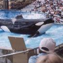 Tilikum with orca trainer Dawn Brancheau in 1998 - 454 x 297