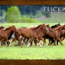 Flicka Wallpaper - 2006