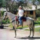 Celeste's Andalusian gelding - Andie - 454 x 378