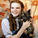 Judy Garland - 437 x 566