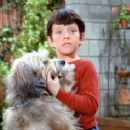 The Brady Bunch - Mike Lookinland - 454 x 237