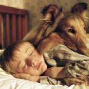 Timmy & Lassie - 454 x 301