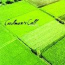 Caedmons Call Album - 40 Acres