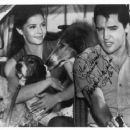 Julie Parrish, Elvis &  Hound Dogs